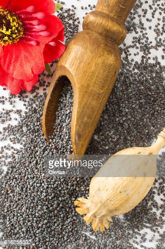 Poppy heads, poppy grain and flower on white : Foto de stock