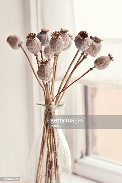 Poppy seed pods in glass vase