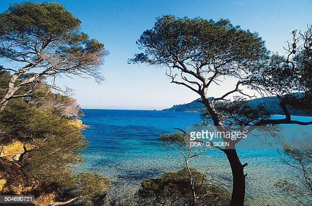 Porquerolles Hyeres Islands ProvenceAlpesCote d'Azur France