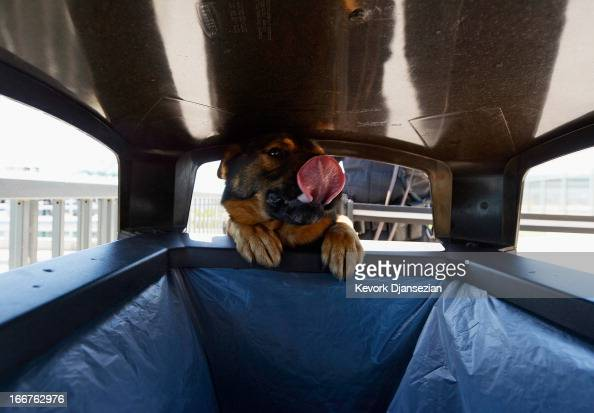 Port of Los Angeles Police officer Anthony Reitz and his bomb sniffing German Sheppard K9 'Boomer' conduct a bomb sweep in a trash can in the...