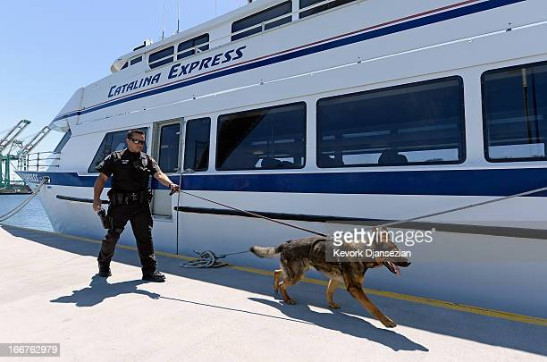 Port of Los Angeles Police officer Anthony Reitz and his bomb sniffing German Sheppard K9 'Boomer' conduct a bomb sweep arround the Catalina Express...