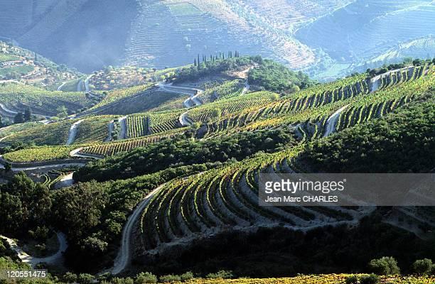 Port Wine Vinho Do Porto in Porto Portugal on January 01 1998 Douro vineyards the river Douro valley