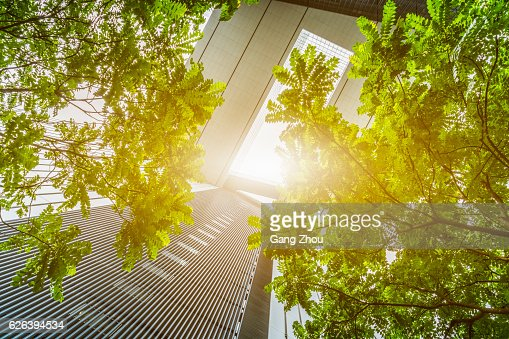 portion of trees against office buildings : Foto de stock