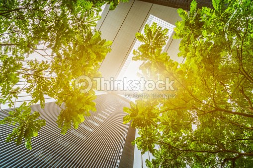 portion of trees against office buildings : Stock Photo