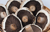 Close up of portobello mushrooms on Olive wood background.