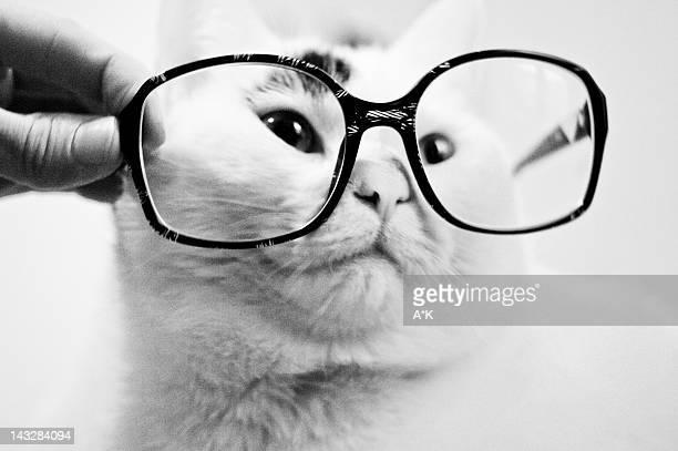 Portrait cat