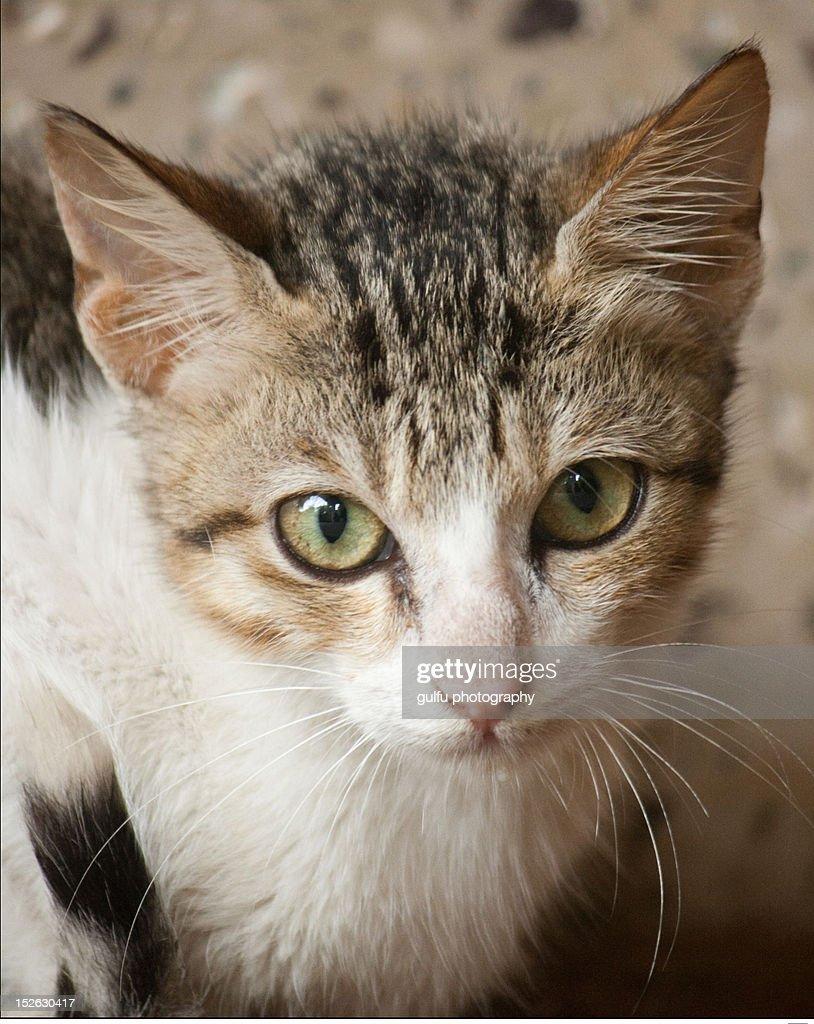 Portrait cat : Stock Photo