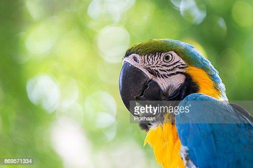 portrait colorful macaw parrot : Stock Photo