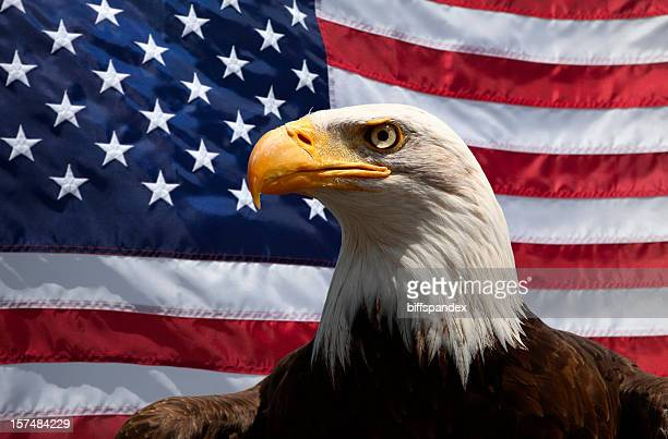 Portrait of a bald eagle in front of an American Flag