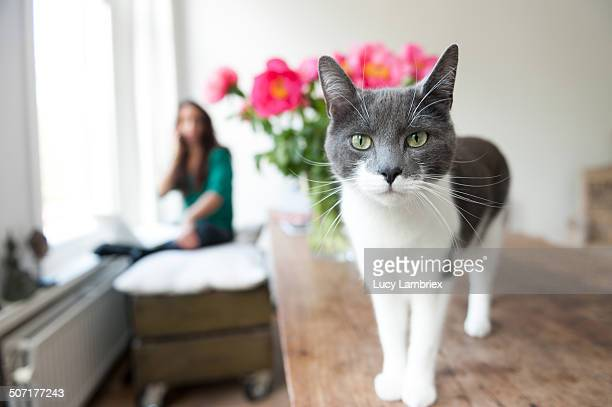 Portrait of a beautiful cat and its owner