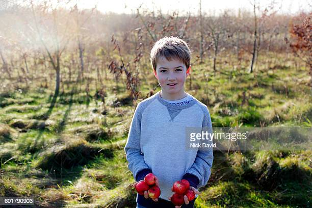 Portrait of a boy holding apples