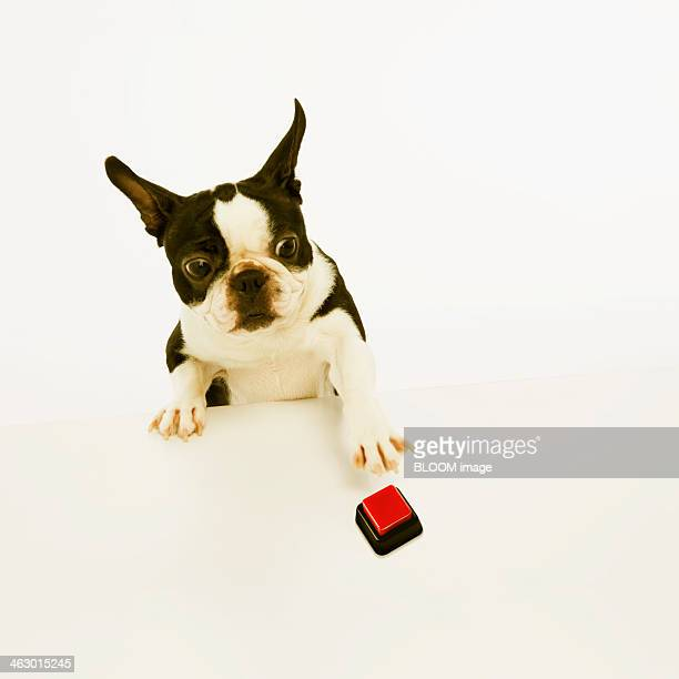 Portrait Of A Dog Reaching Button