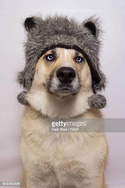 Portrait of a dog wearing woolly hat