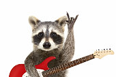 Portrait of a funny raccoon with electric guitar, showing a rock gesture. Isolated on white background