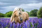 Beautiful horse posing on summer background.