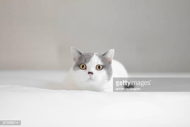 Portrait of a kitten lying on a bed