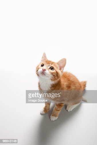 Portrait of a kitten : Stock Photo