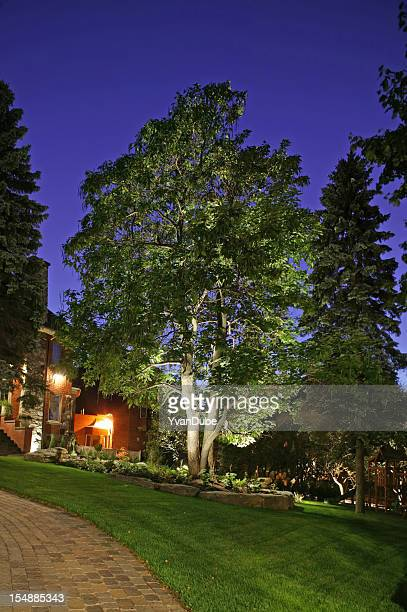 Portrait of a large tree on a manicured lawn at night
