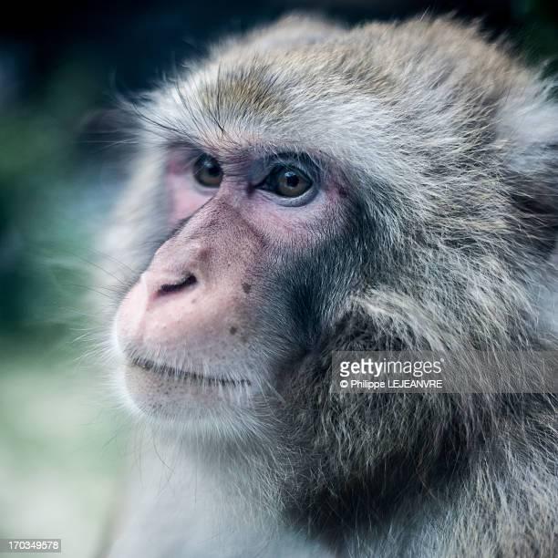 Year Monkey Island Was Released