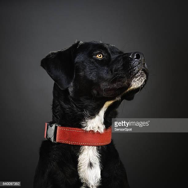 Portrait de chien un cocktail.