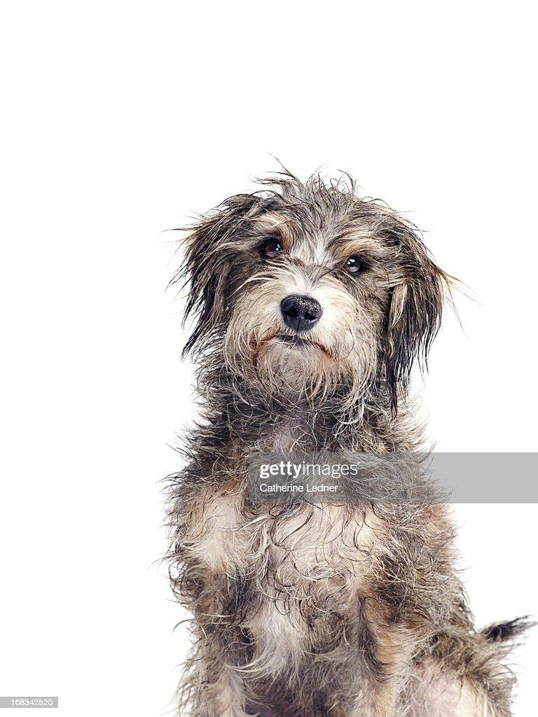 Portrait of a Mutt : Stock Photo