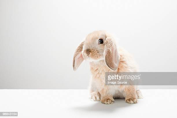 Portrait of a rabbit