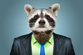 Portrait of a raccoon in a business suit