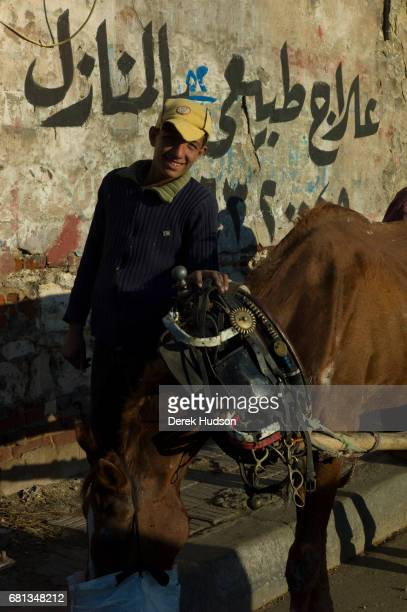 Portrait of a scrap collector as he stands on a sidewalk and feeds his horse Alexandria Egypt December 10 2009