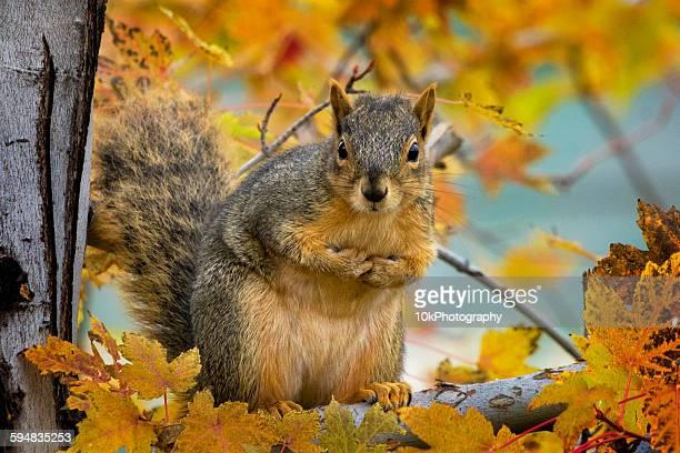 Portrait of a squirrel, Colorado, USA