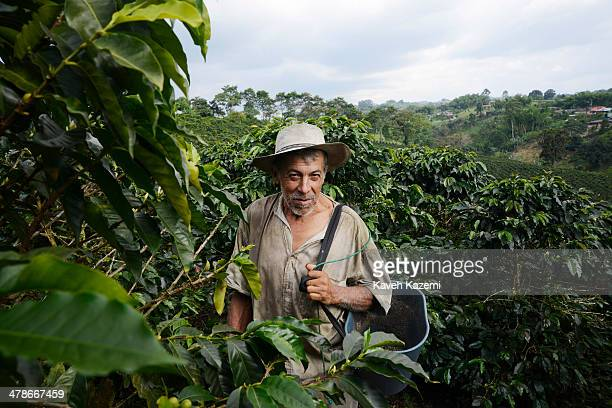 A portrait of a typical coffee picker wearing a sombrero and holding a plastic bucket and surrounded by coffee trees in a plantation on January 14...