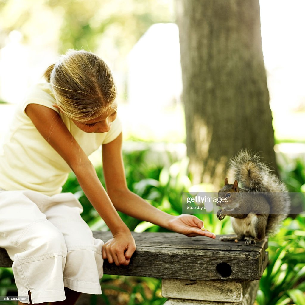 portrait of a young girl feeding a squirrel : Stock Photo