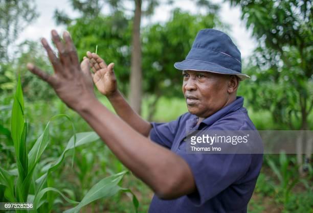 Portrait of an African farmer at his mango farm on May 19 2017 in Ithanka Kenya