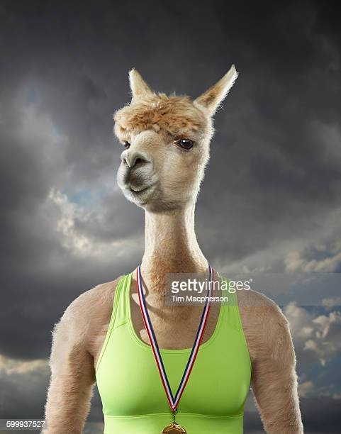 Portrait of an Alpaca dressed as an athelete