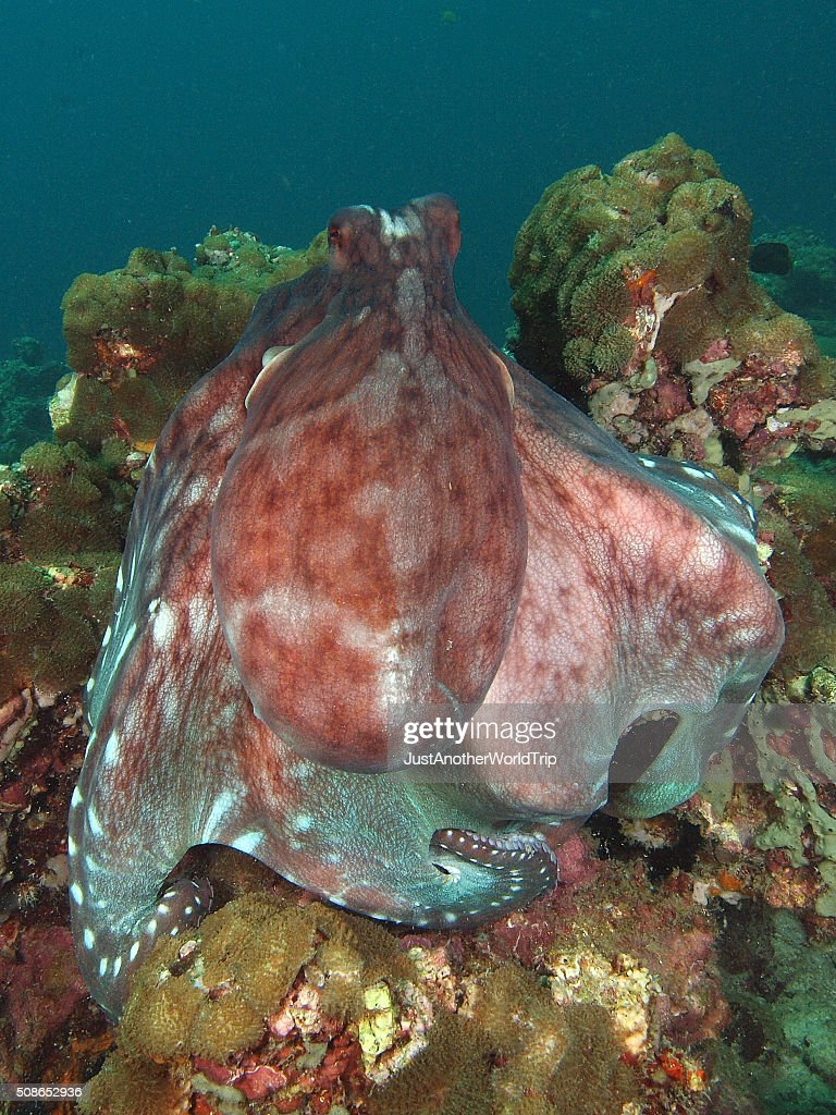Portrait of an octopus : Stock Photo