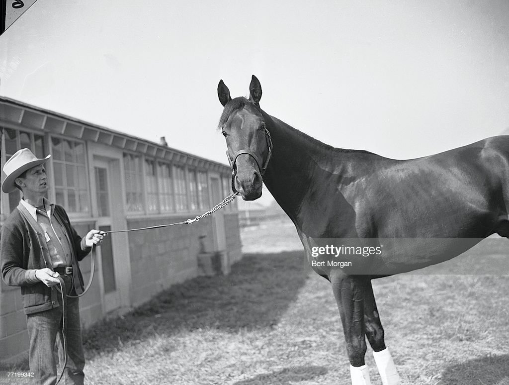 Portrait of bay colt Citation his reins held by his trainer Jimmy Jones at the Belmont Futurity Stakes Elmont New York October 8 1947 Citation won...