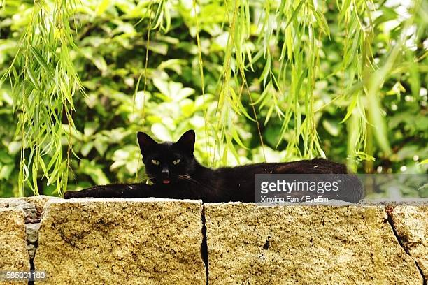 Portrait Of Black Cat Lying On Stone Wall Against Trees