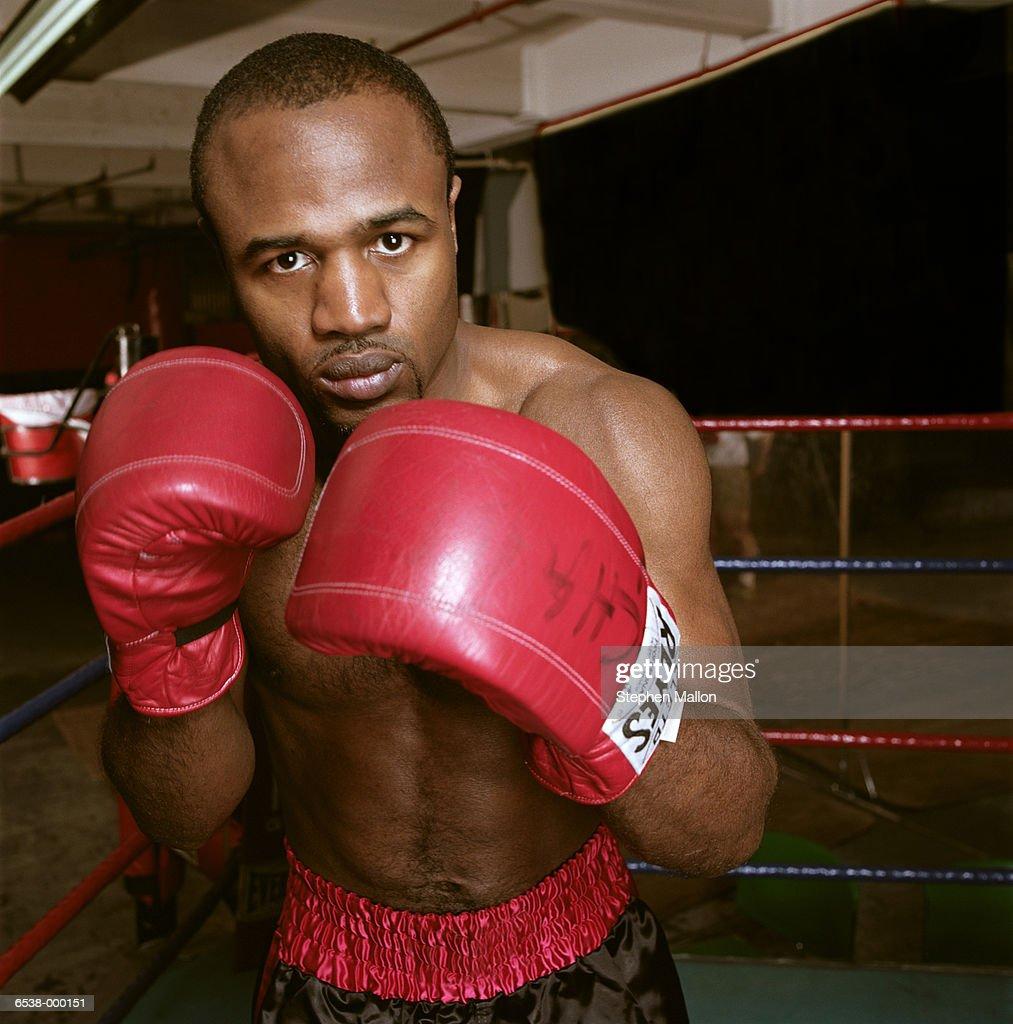 Portrait of Boxer : Stock Photo