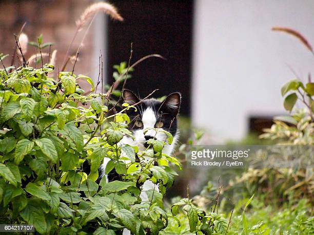 Portrait Of Cat Behind Plants