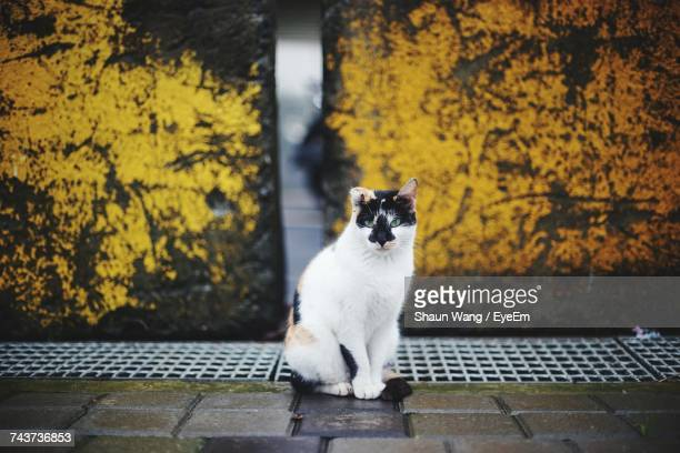 Portrait Of Cat By Sewage Against Lichen On Wall