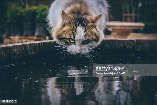 Portrait Of Cat Drinking Water In Pond