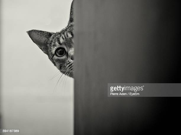 Portrait Of Cat Hiding Behind Column