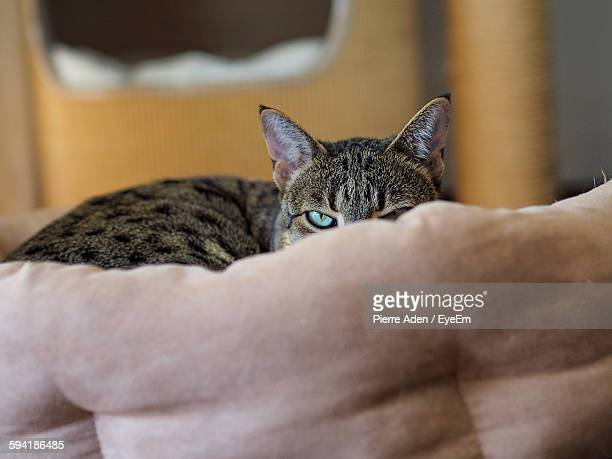Portrait Of Cat Hiding Behind Sofa At Home