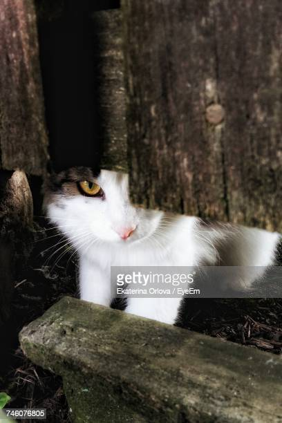Portrait Of Cat Hiding Behind Wooden Fence