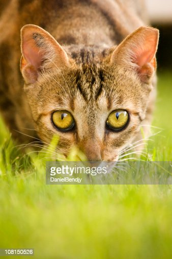 Portrait of Cat Hiding in Grass