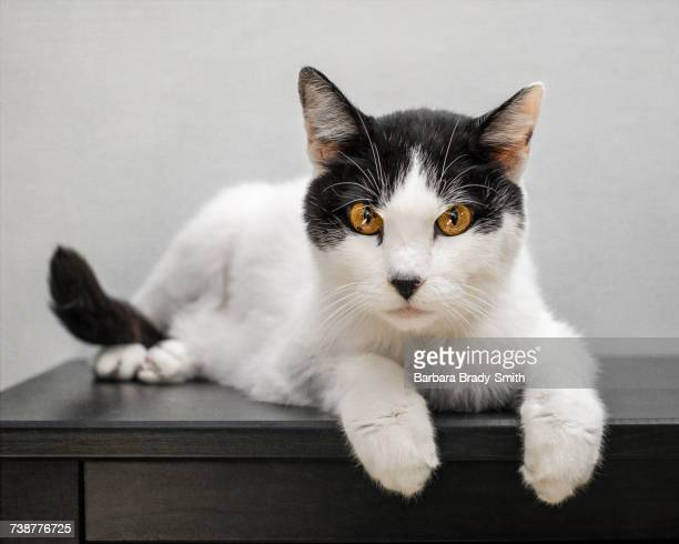 Portrait of cat laying on table
