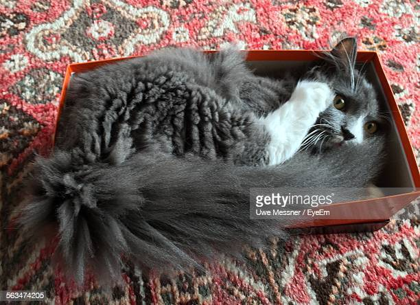 Portrait Of Cat Lying In Box