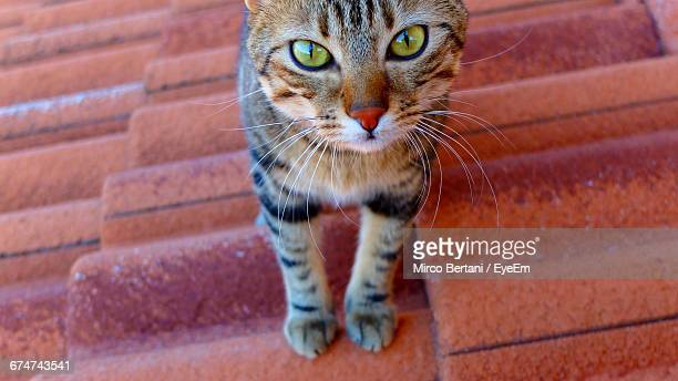 Portrait Of Cat On Roof