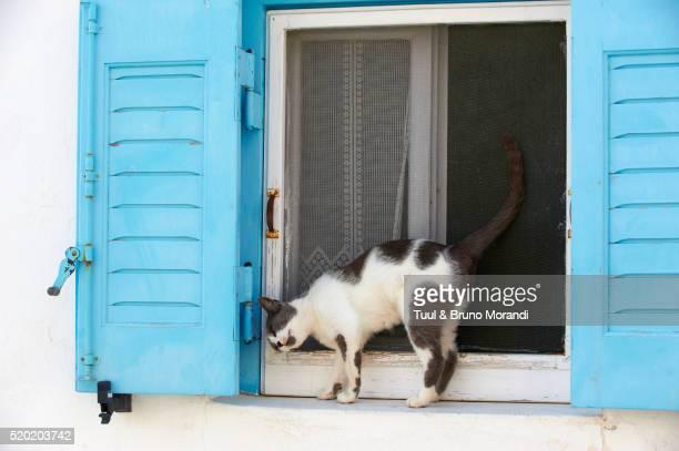 Portrait of cat on window sill, Santorin, Cyclades, Greece