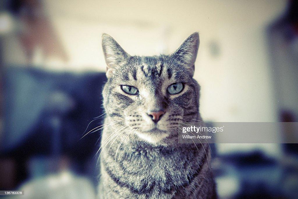 Portrait of cat : Stock Photo