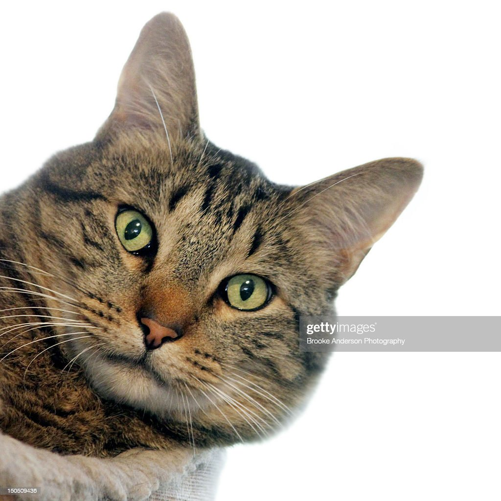 Portrait of cat : Stock Photo